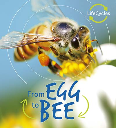 Lifecycles: Egg to Bee - Jacket