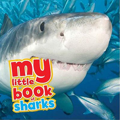 My Little Book of Sharks - Jacket