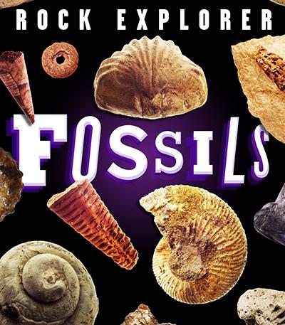 Rock Explorer: Fossils - Jacket