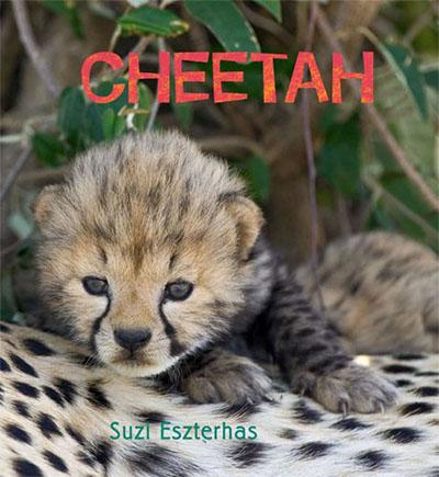 Cheetah - Jacket